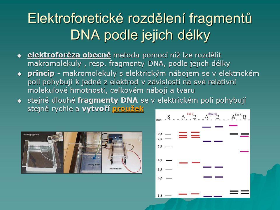 Elektroforetické rozdělení fragmentů DNA podle jejich délky  elektroforéza obecně metoda pomocí níž lze rozdělit makromolekuly, resp. fragmenty DNA,