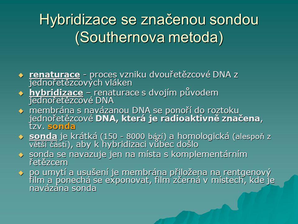 Hybridizace se značenou sondou (Southernova metoda)  renaturace - proces vzniku dvouřetězcové DNA z jednořetězcových vláken  hybridizace – renaturac