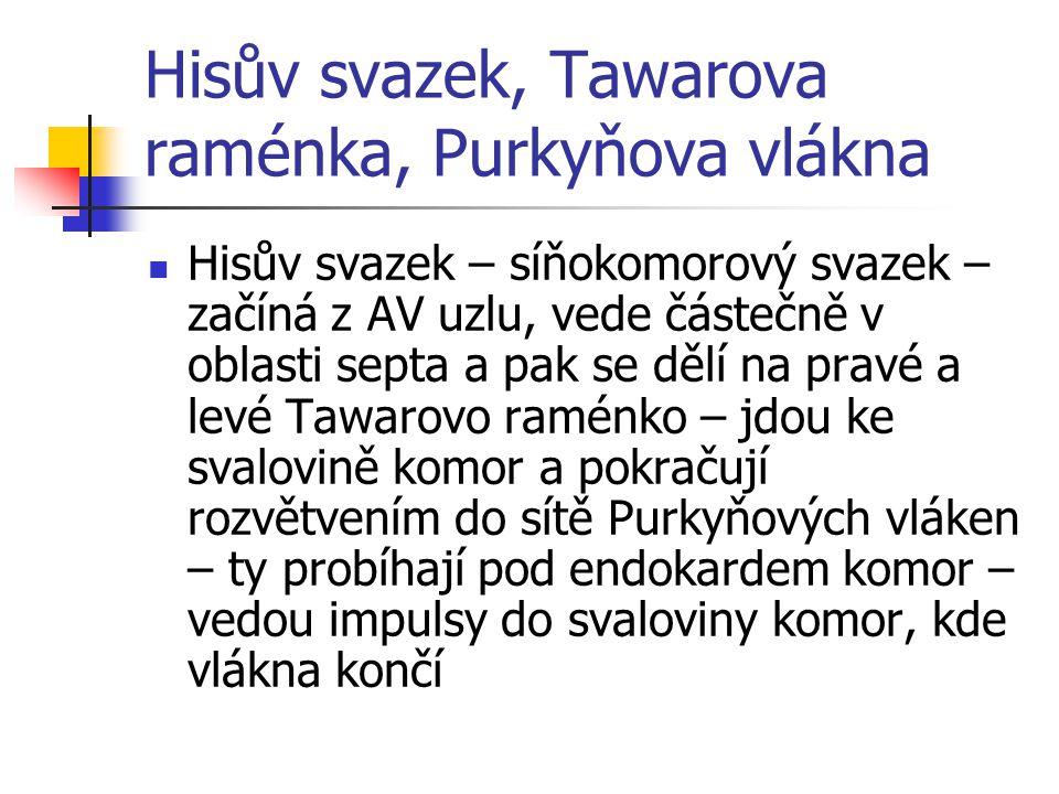 Hisův svazek, Tawarova raménka, Purkyňova vlákna Hisův svazek – síňokomorový svazek – začíná z AV uzlu, vede částečně v oblasti septa a pak se dělí na