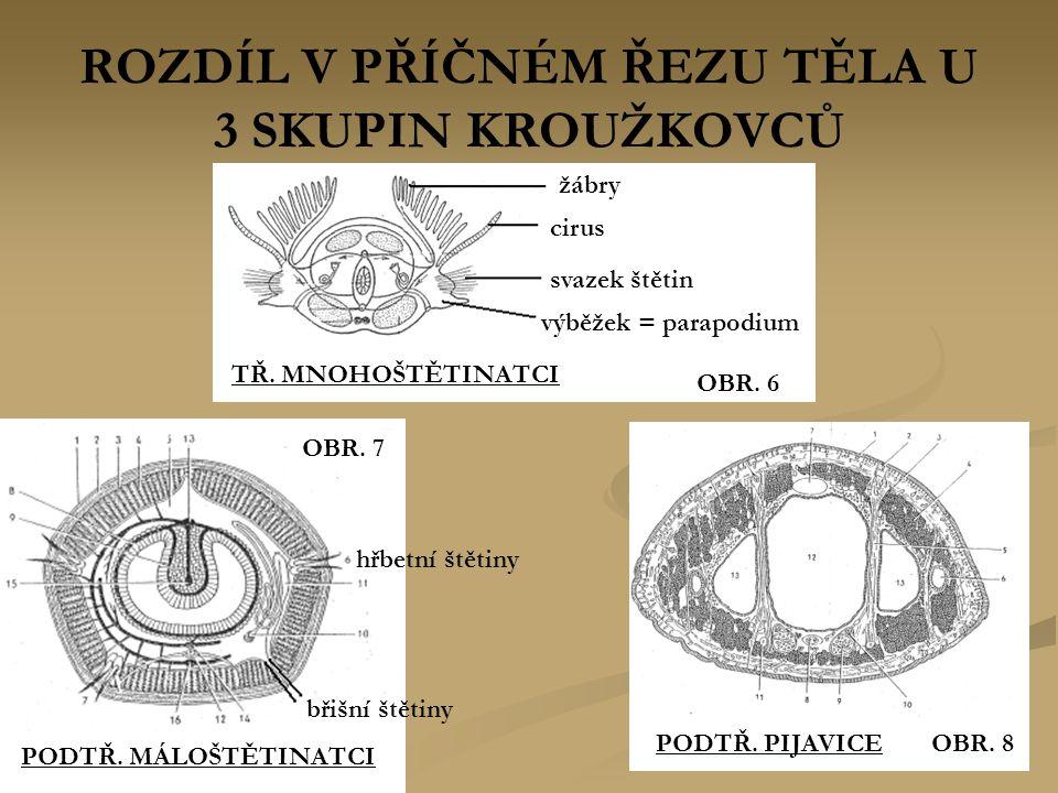 ROZDÍL V PŘÍČNÉM ŘEZU TĚLA U 3 SKUPIN KROUŽKOVCŮ TŘ. MNOHOŠTĚTINATCI žábry cirus svazek štětin výběžek = parapodium OBR. 6 OBR. 8PODTŘ. PIJAVICE PODTŘ