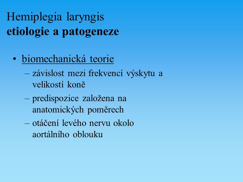 Hemiplegia laryngis etiologie a patogeneze biomechanická teorie –závislost mezi frekvencí výskytu a velikostí koně –predispozice založena na anatomick