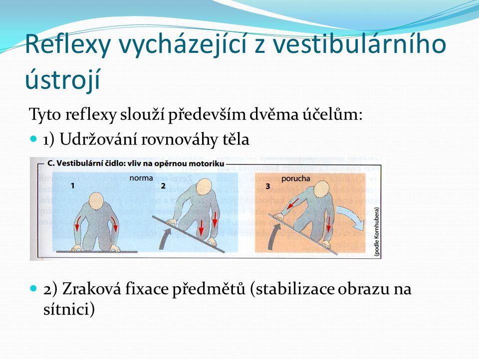 Reflexy vycházející z vestibulárního ústrojí Tyto reflexy slouží především dvěma účelům: 1) Udržování rovnováhy těla 2) Zraková fixace předmětů (stabi