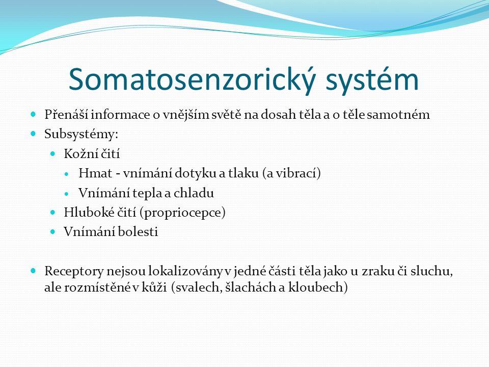 Somatosenzorický systém Přenáší informace o vnějším světě na dosah těla a o těle samotném Subsystémy: Kožní čití Hmat - vnímání dotyku a tlaku (a vibr