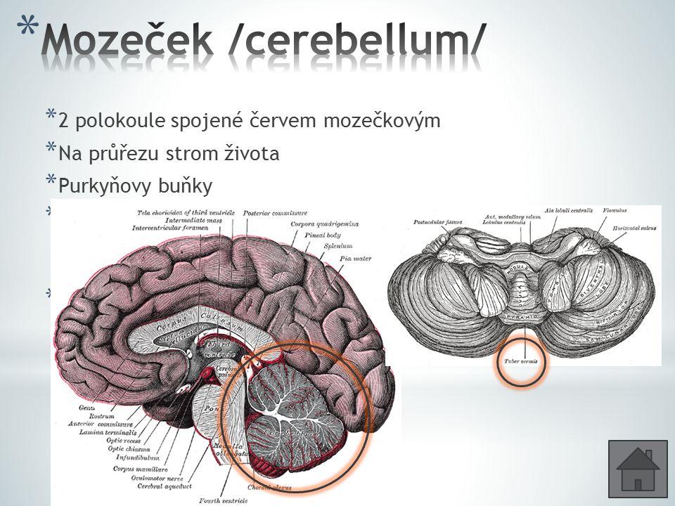 * 2 polokoule spojené červem mozečkovým * Na průřezu strom života * Purkyňovy buňky * Udržování tělesné rovnováhy /vedou sem dráhy ze sval. a šlach. č