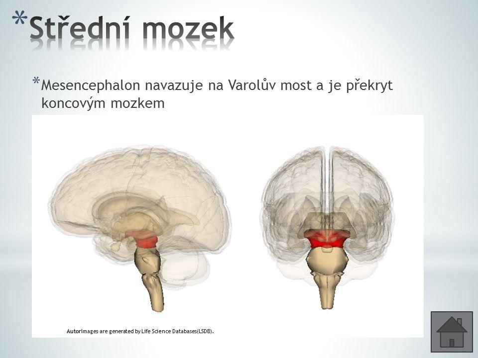 * Mesencephalon navazuje na Varolův most a je překryt koncovým mozkem * Čtverohrbolí – podkorové centrum pro orientační pohyby /otáčení hlavy za světl