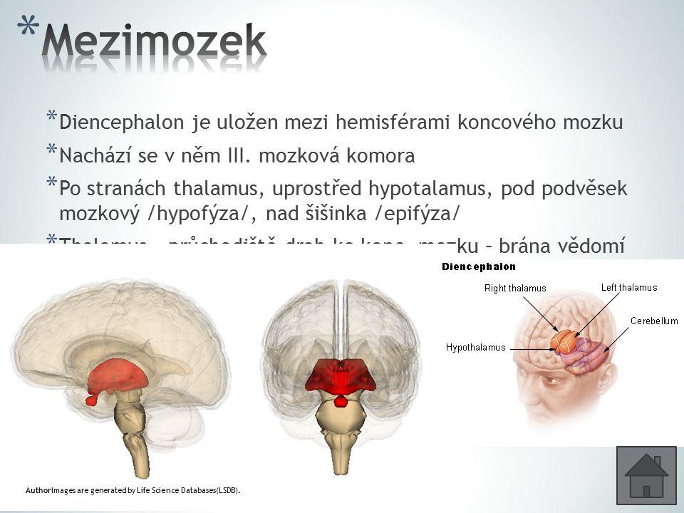 * Diencephalon je uložen mezi hemisférami koncového mozku * Nachází se v něm III. mozková komora * Po stranách thalamus, uprostřed hypotalamus, pod po