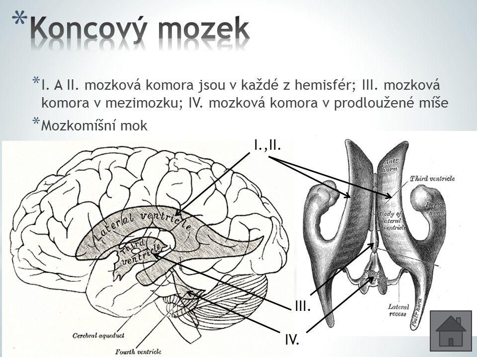 * I. A II. mozková komora jsou v každé z hemisfér; III. mozková komora v mezimozku; IV. mozková komora v prodloužené míše * Mozkomíšní mok I.,II. III.