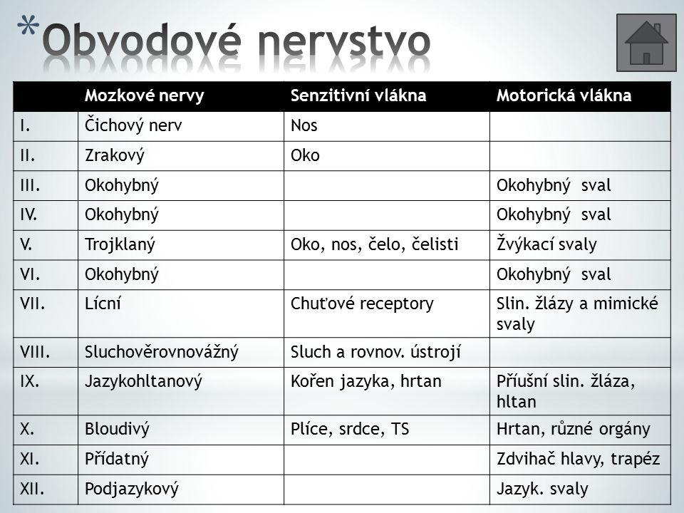 Mozkové nervySenzitivní vláknaMotorická vlákna I.Čichový nervNos II.ZrakovýOko III.OkohybnýOkohybný sval IV.OkohybnýOkohybný sval V.TrojklanýOko, nos,