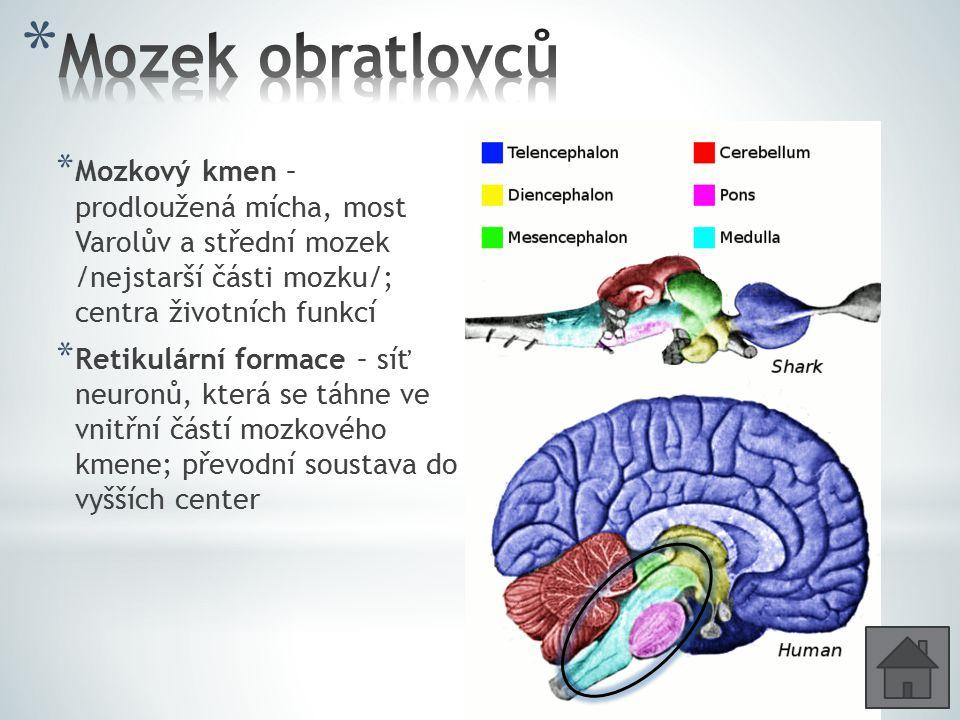 * Mozkový kmen – prodloužená mícha, most Varolův a střední mozek /nejstarší části mozku/; centra životních funkcí * Retikulární formace – síť neuronů,
