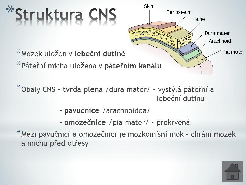 * Šedá hmota – je tvořena převážně těly neuronů - je na povrchu koncového mozku a mozečku; uprostřed páteřní míchy * Bílá hmota – tvořena převážně neurity /dráhy/ - uvnitř mozku a na povrchu páteřní míchy * Dutiny CNS – kanálek uprostřed míchy a 4 mozkové komory - jsou navzájem propojeny a vyplněny mozkomíšním mokem