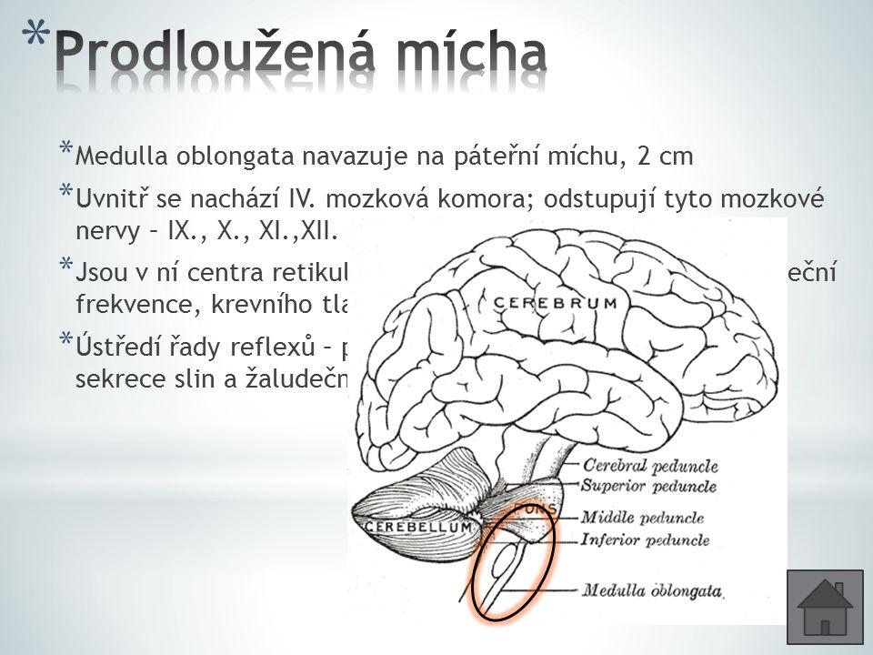 * Medulla oblongata navazuje na páteřní míchu, 2 cm * Uvnitř se nachází IV. mozková komora; odstupují tyto mozkové nervy – IX., X., XI.,XII. * Jsou v