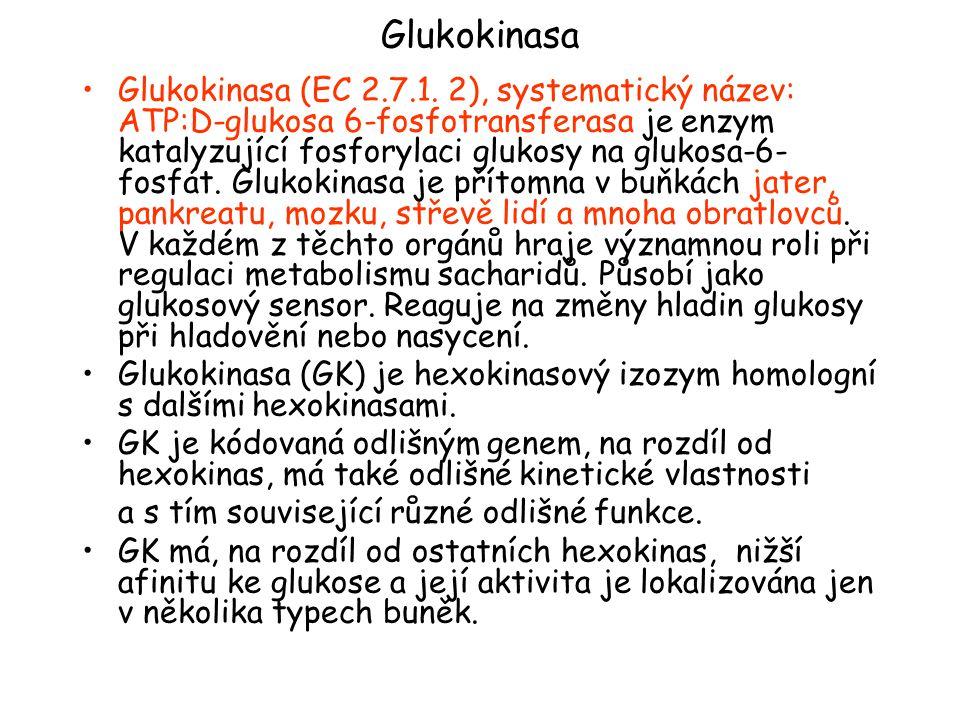 Glukokinasa Glukokinasa (EC 2.7.1.