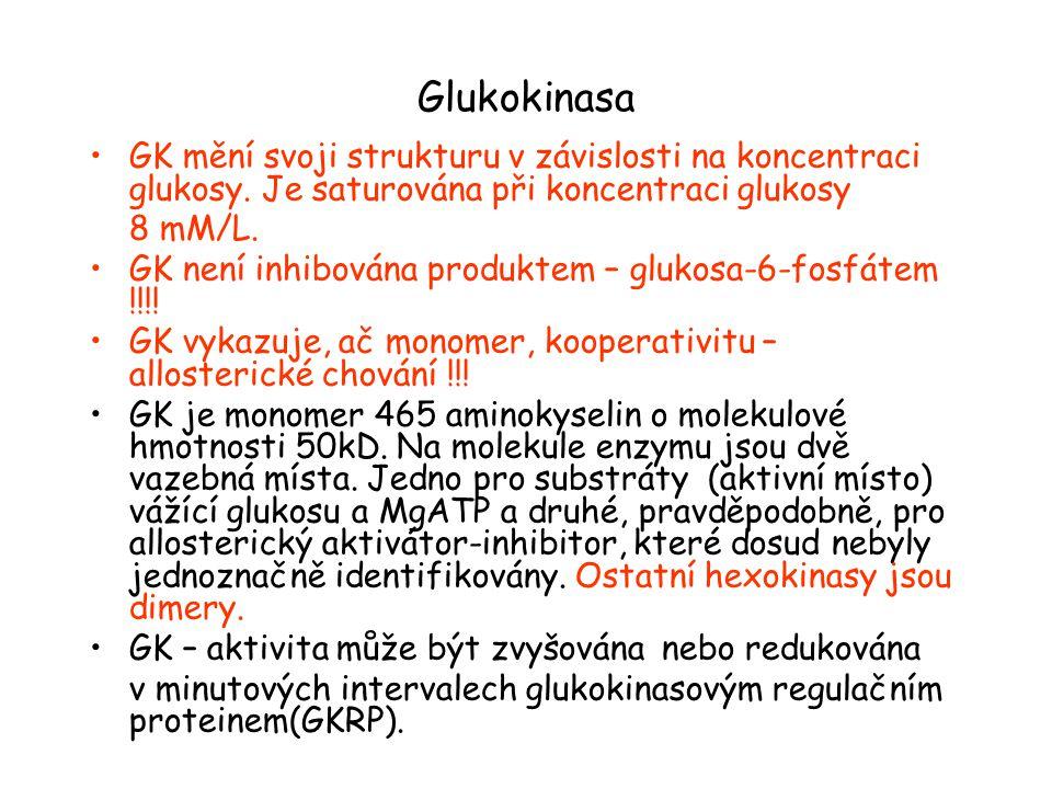 Glukokinasa GK mění svoji strukturu v závislosti na koncentraci glukosy.