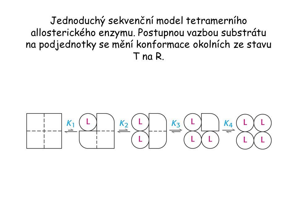 Jednoduchý sekvenční model tetramerního allosterického enzymu.