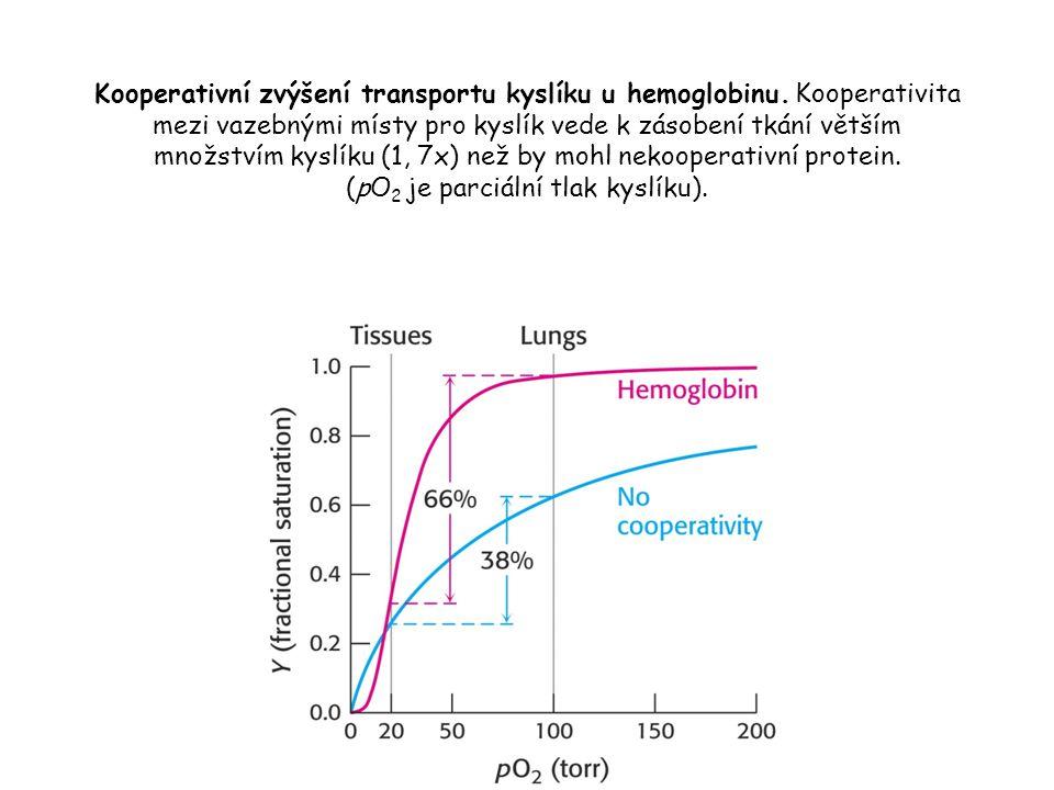 Kooperativní zvýšení transportu kyslíku u hemoglobinu.