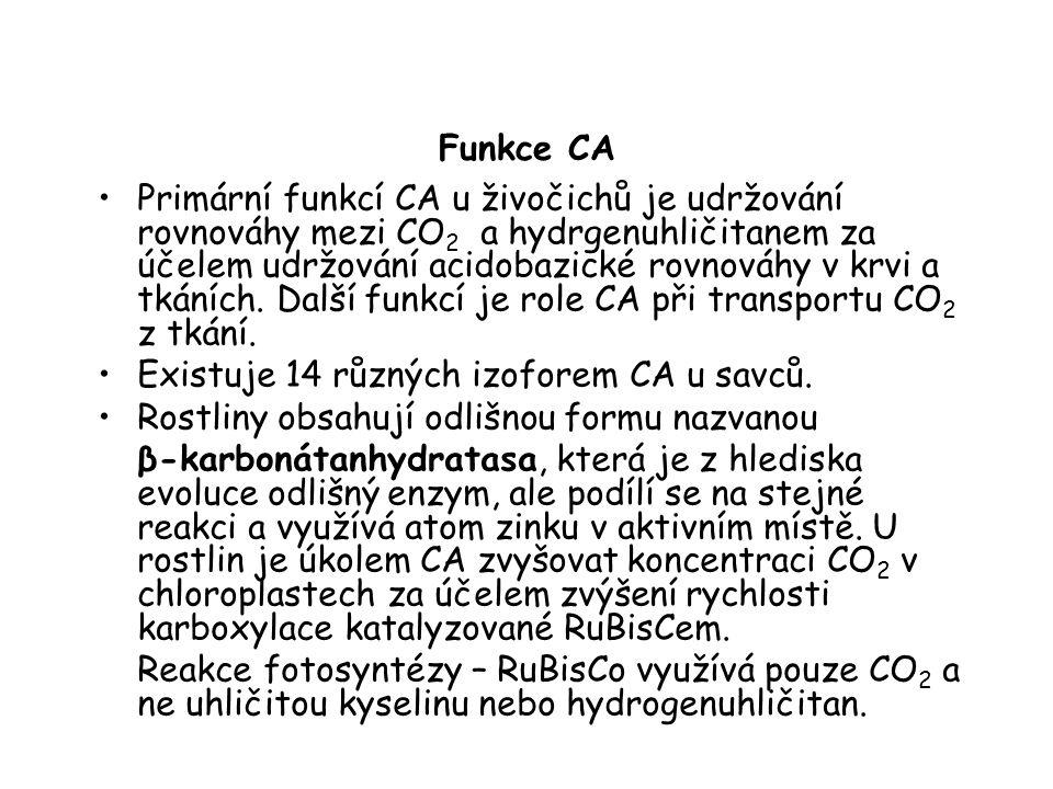 Funkce CA Primární funkcí CA u živočichů je udržování rovnováhy mezi CO 2 a hydrgenuhličitanem za účelem udržování acidobazické rovnováhy v krvi a tkáních.