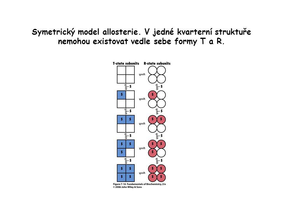 Symetrický model allosterie. V jedné kvarterní struktuře nemohou existovat vedle sebe formy T a R.