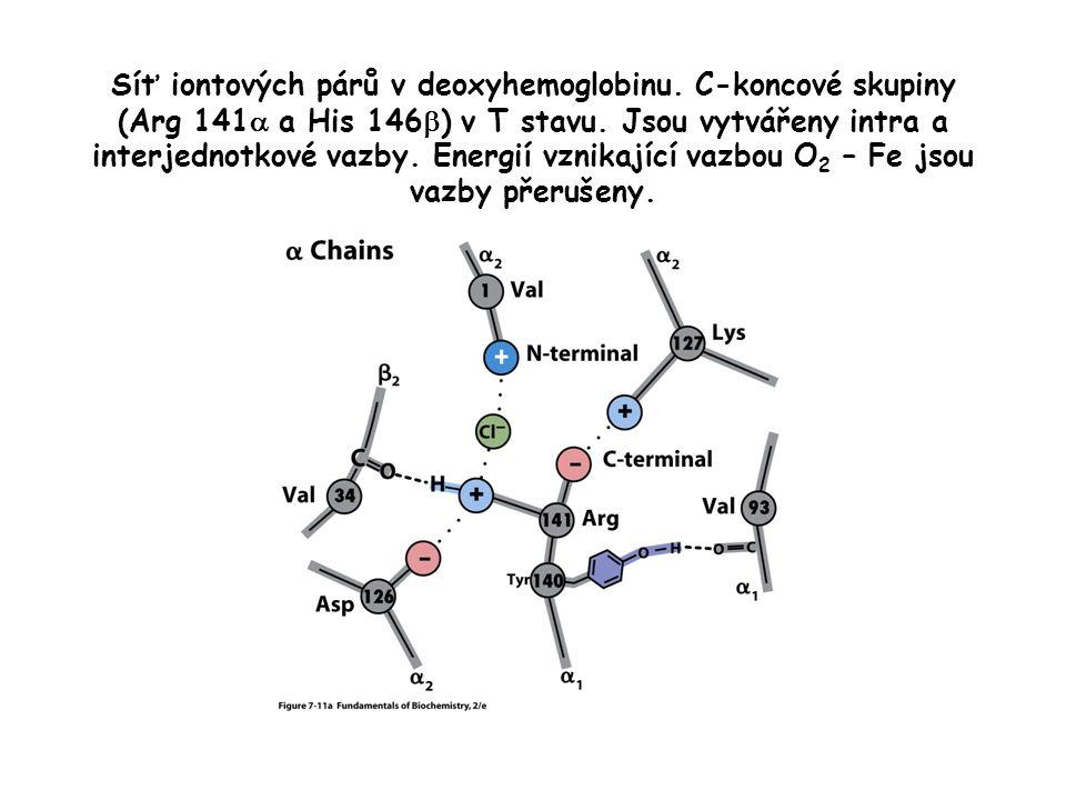 Síť iontových párů v deoxyhemoglobinu.C-koncové skupiny (Arg 141  a His 146  ) v T stavu.