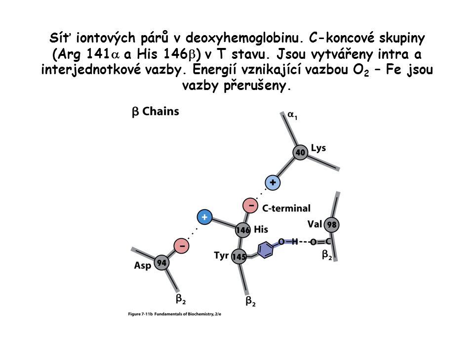 Který z modelů je ten, který lze aplikovat na kooperativní vazbu kyslíku na hemoglobin (Hb) .