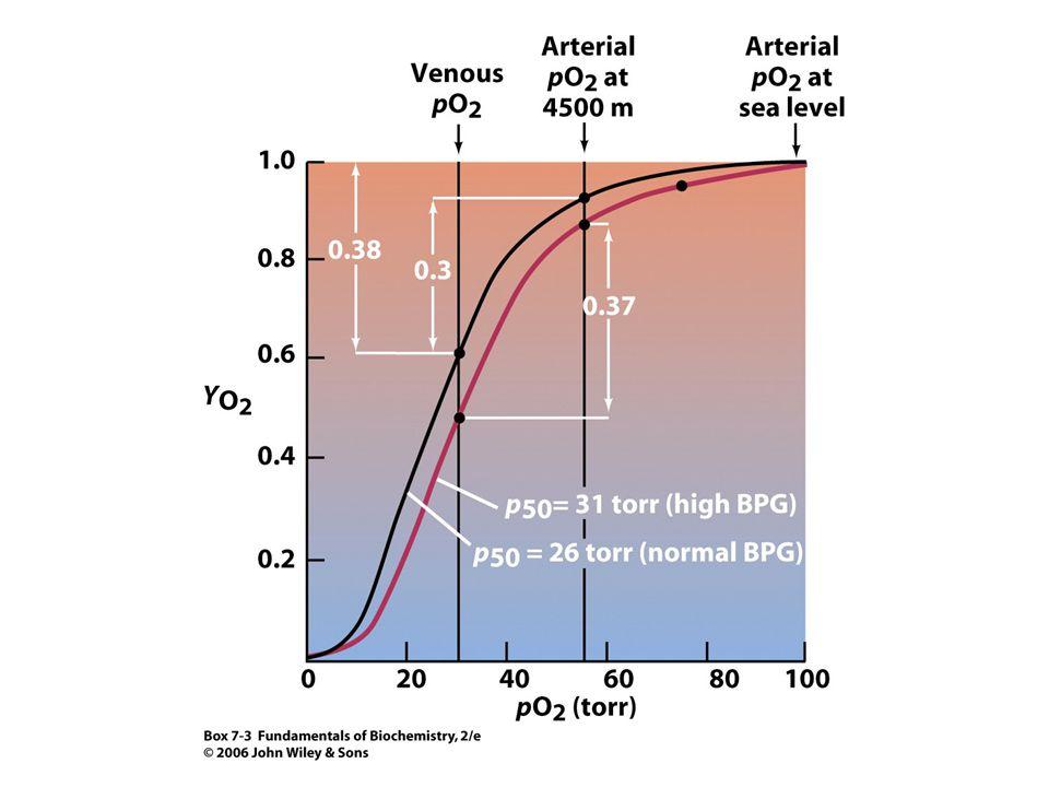 Abnormální hemoglobiny