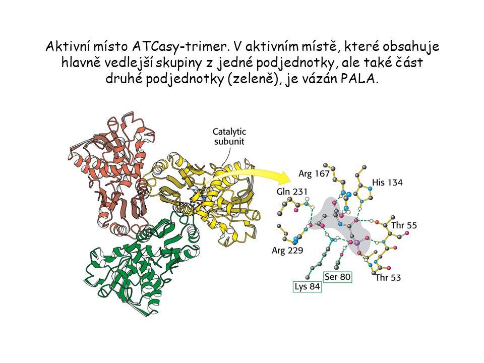 Aktivní místo ATCasy-trimer.