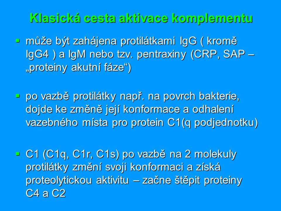 """Klasická cesta aktivace komplementu  může být zahájena protilátkami IgG ( kromě IgG4 ) a IgM nebo tzv. pentraxiny (CRP, SAP – """"proteiny akutní fáze"""")"""