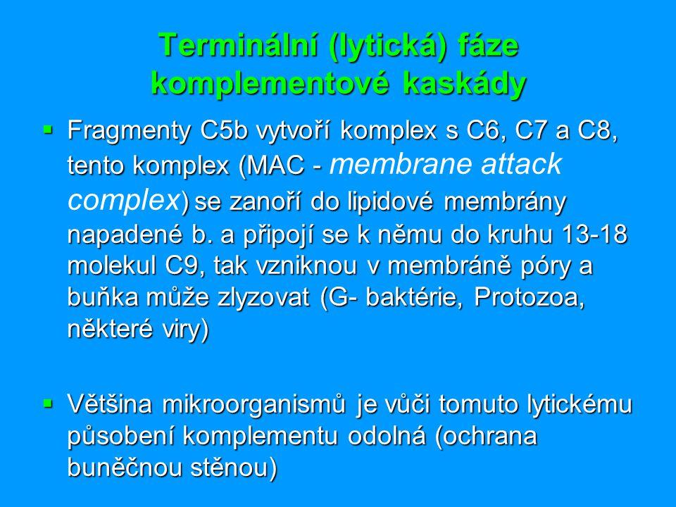 Terminální (lytická) fáze komplementové kaskády  Fragmenty C5b vytvoří komplex s C6, C7 a C8, tento komplex (MAC - ) se zanoří do lipidové membrány n