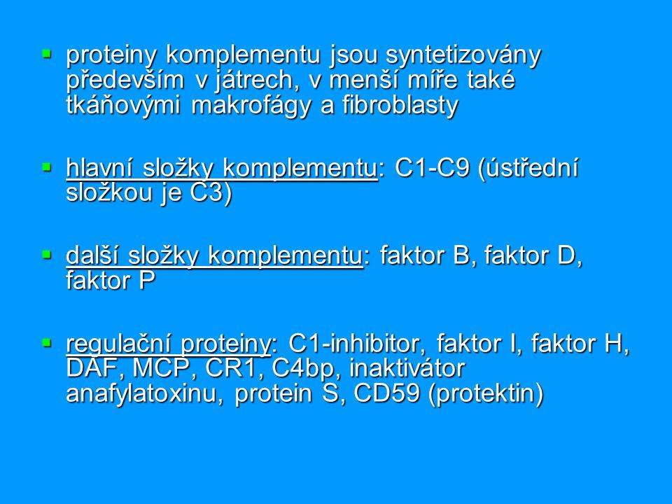  proteiny komplementu jsou syntetizovány především v játrech, v menší míře také tkáňovými makrofágy a fibroblasty  hlavní složky komplementu: C1-C9