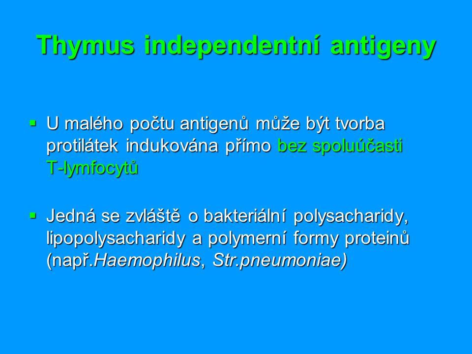 Thymus independentní antigeny  U malého počtu antigenů může být tvorba protilátek indukována přímo bez spoluúčasti T-lymfocytů  Jedná se zvláště o b