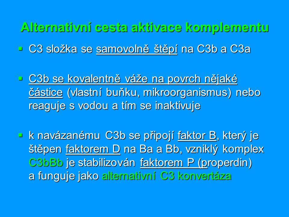 Alternativní cesta aktivace komplementu  C3 složka se samovolně štěpí na C3b a C3a  C3b se kovalentně váže na povrch nějaké částice (vlastní buňku,