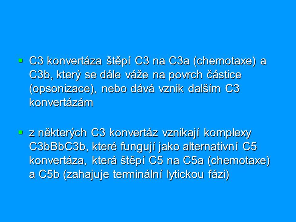 C3 konvertáza štěpí C3 na C3a (chemotaxe) a C3b, který se dále váže na povrch částice (opsonizace), nebo dává vznik dalším C3 konvertázám  z někter
