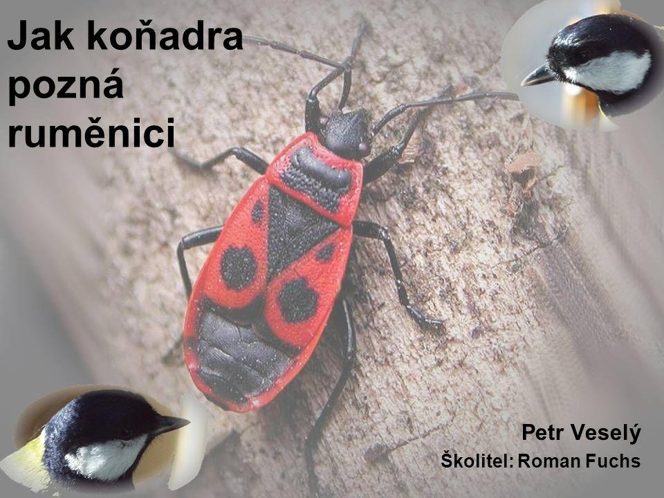 Jak koňadra pozná ruměnici Petr Veselý Školitel: Roman Fuchs