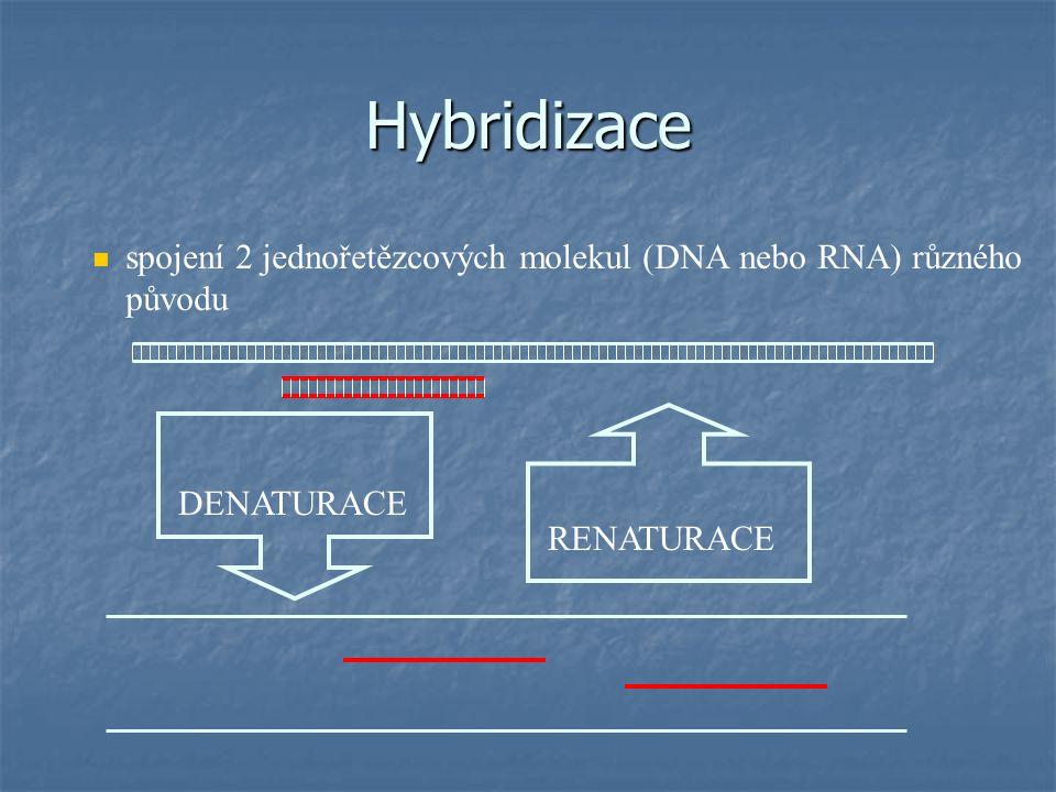 Měření intenzity fluorescence = odpovídá množství RNA ve vzorku