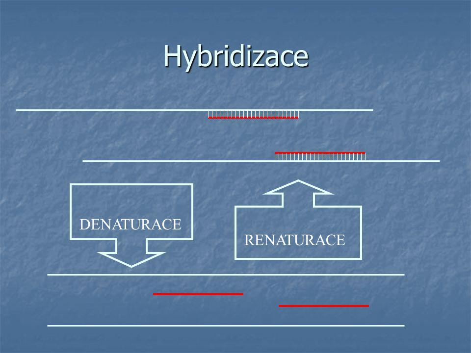 Hybridizace spojení 2 jednořetězcových molekul (DNA nebo RNA) různého původu DENATURACE RENATURACE