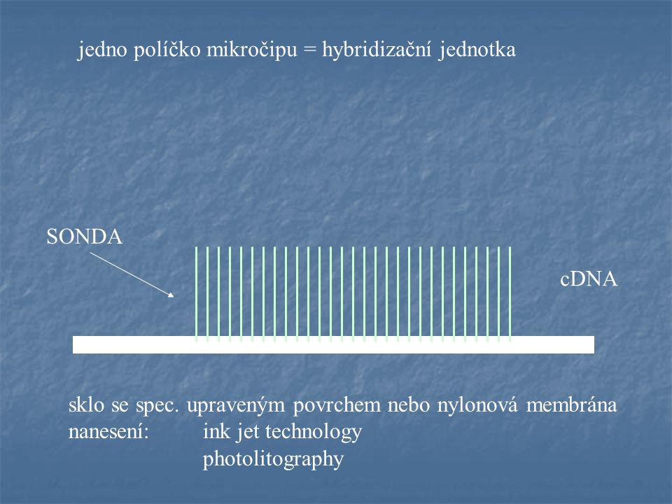 Microarrays po hybridizaci - počítačové zobrazení Affymetrix - genové čipy cDNA microarray