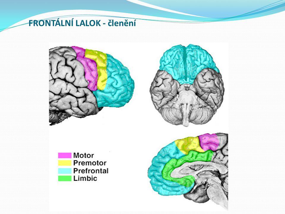 K dalšímu studiu Orel, M., Facová, V.a kol. (2009): Člověk jeho mozek a svět.