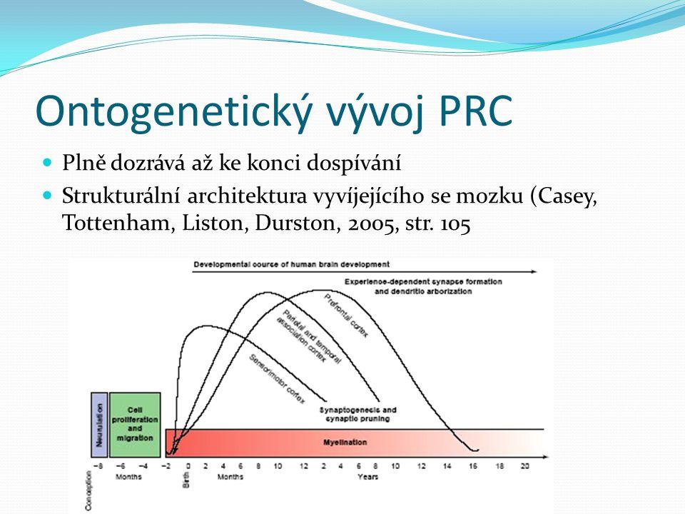 Ontogenetický vývoj PRC Plně dozrává až ke konci dospívání Strukturální architektura vyvíjejícího se mozku (Casey, Tottenham, Liston, Durston, 2005, str.