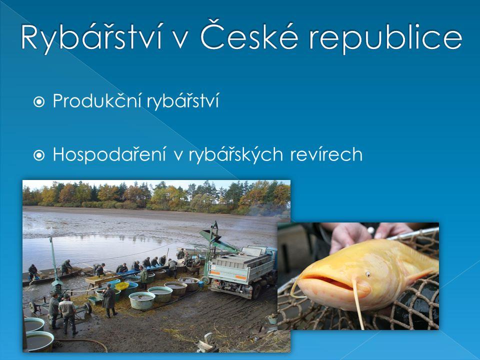 Produkční rybářství  Hospodaření v rybářských revírech