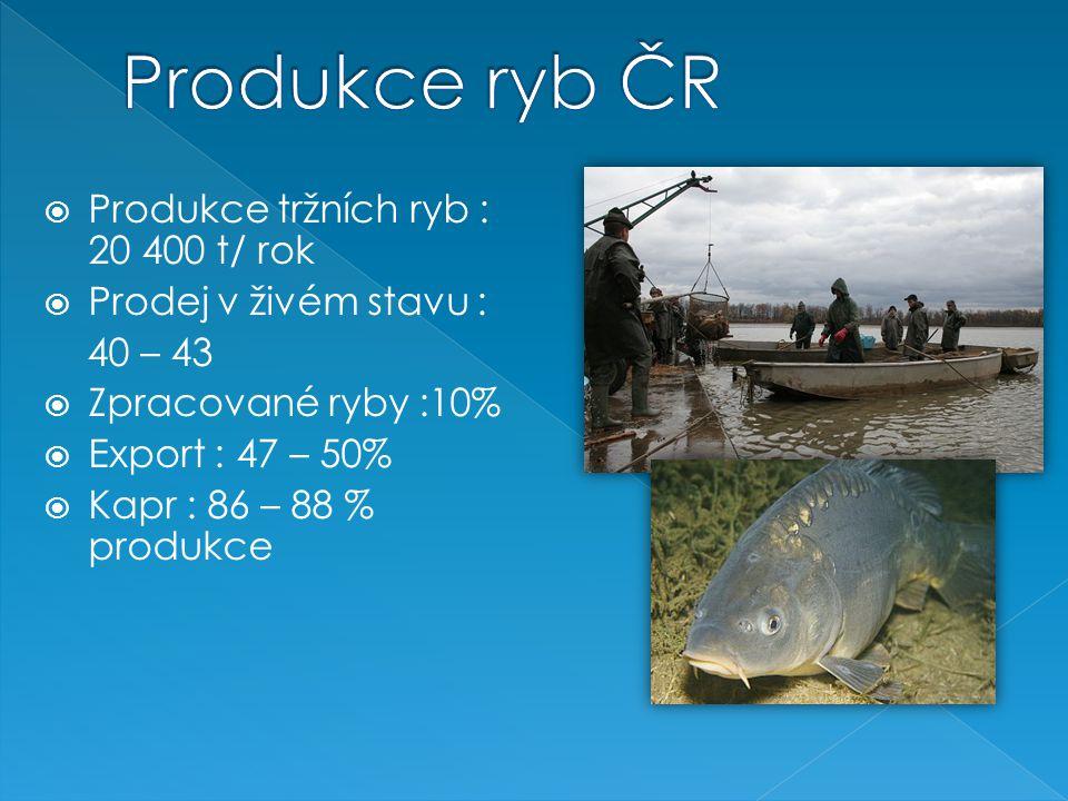  Produkce tržních ryb : 20 400 t/ rok  Prodej v živém stavu : 40 – 43  Zpracované ryby :10%  Export : 47 – 50%  Kapr : 86 – 88 % produkce