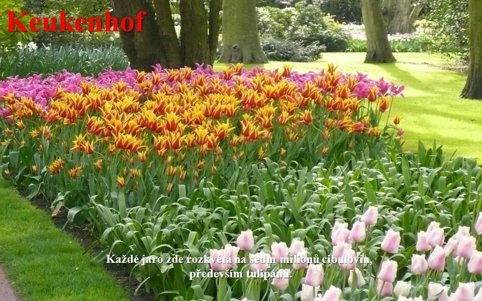 Keukenhof Park je s rozlohou 32 ha největším květinovým parkem nejen v Holandsku, ale i v celé Evropě.