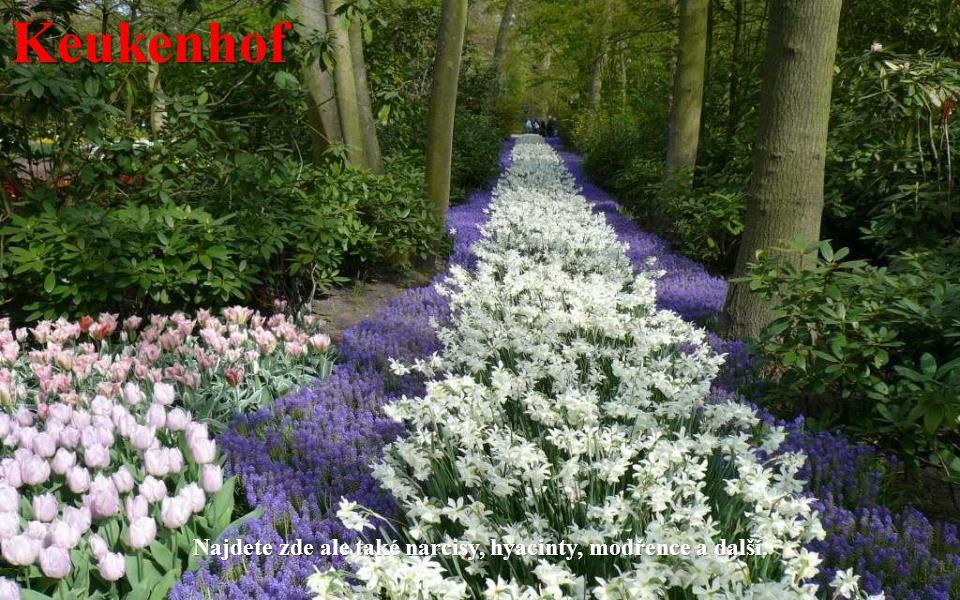 Keukenhof Každé jaro zde rozkvétá na sedm milionů cibulovin, především tulipánů.