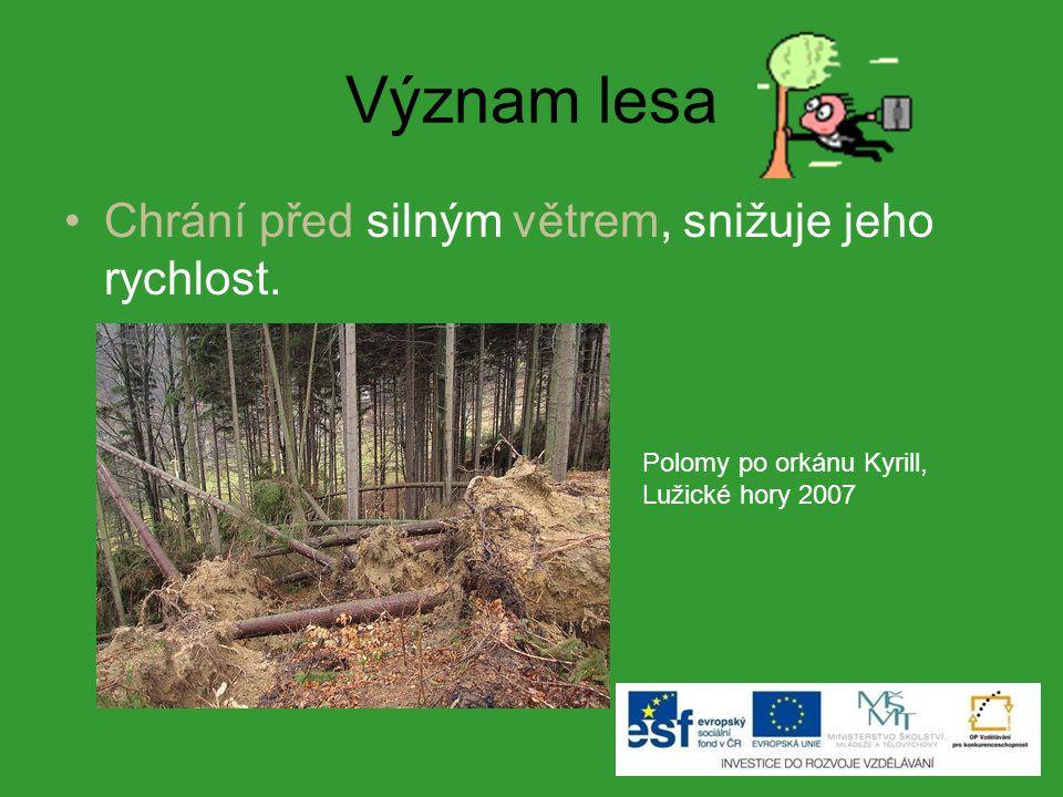 Význam lesa Chrání před silným větrem, snižuje jeho rychlost. Polomy po orkánu Kyrill, Lužické hory 2007