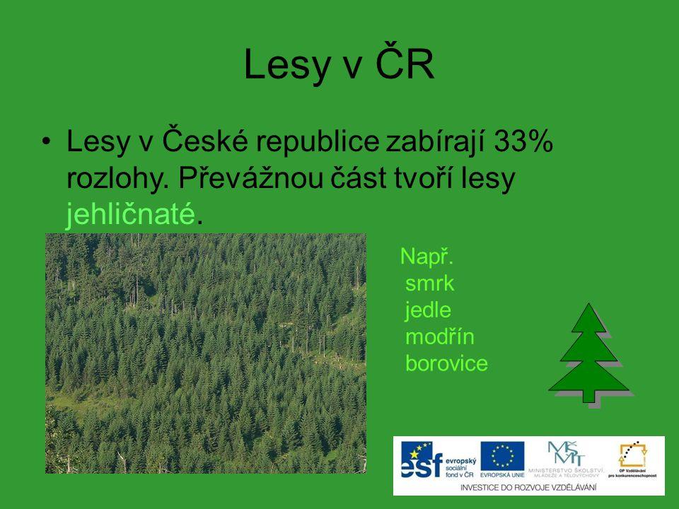 Lesy v ČR Lesy v České republice zabírají 33% rozlohy. Převážnou část tvoří lesy jehličnaté. Např. smrk jedle modřín borovice
