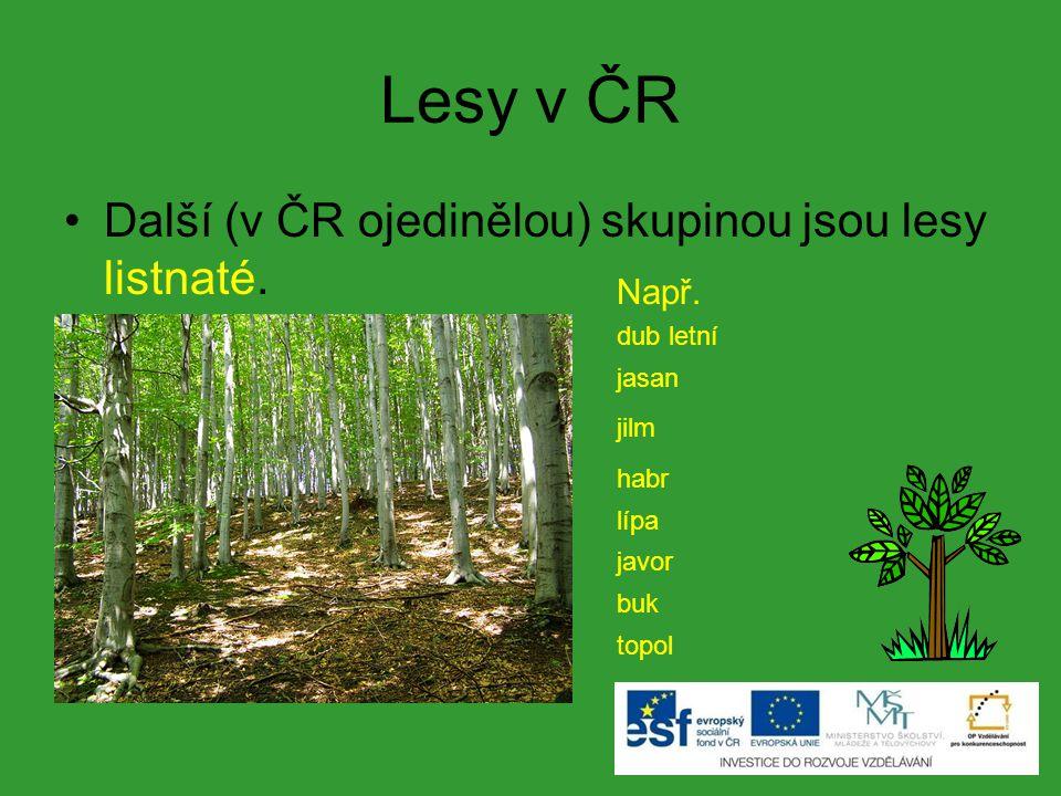 Lesy v ČR Další (v ČR ojedinělou) skupinou jsou lesy listnaté. Např. dub letní jasan jilm habr lípa javor buk topol