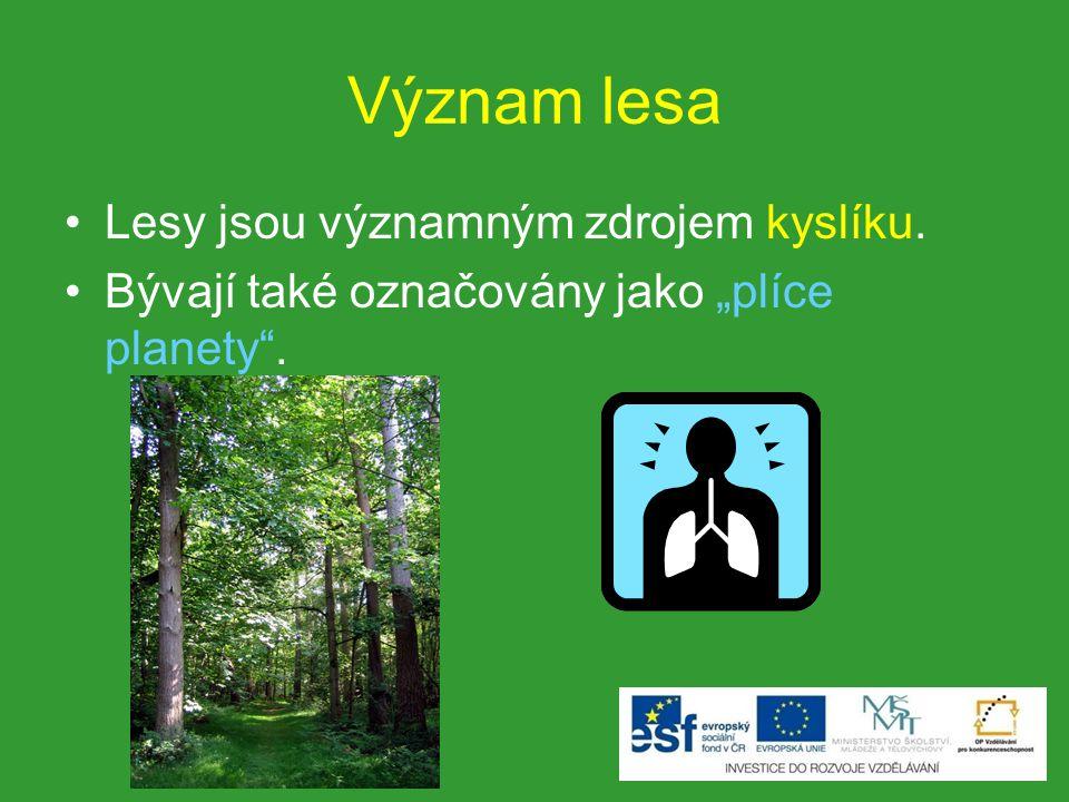 """Význam lesa Lesy jsou významným zdrojem kyslíku. Bývají také označovány jako """"plíce planety""""."""
