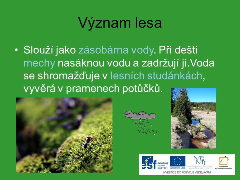 Význam lesa Slouží jako zásobárna vody.