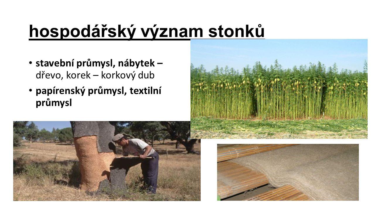 hospodářský význam stonků stavební průmysl, nábytek – dřevo, korek – korkový dub papírenský průmysl, textilní průmysl