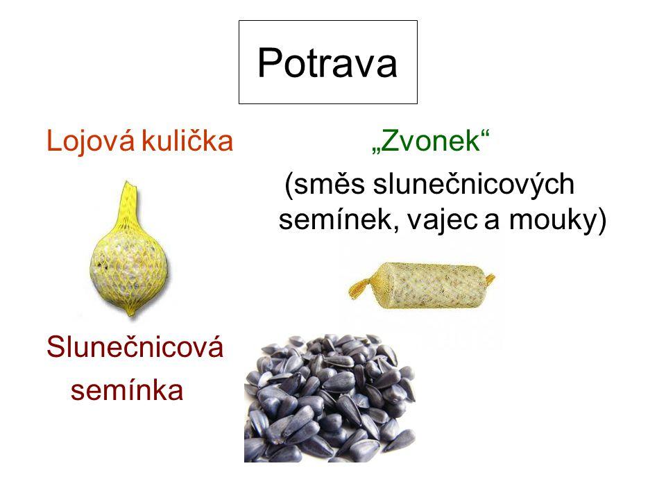 """Potrava Lojová kulička """"Zvonek"""" (směs slunečnicových semínek, vajec a mouky) Slunečnicová semínka"""