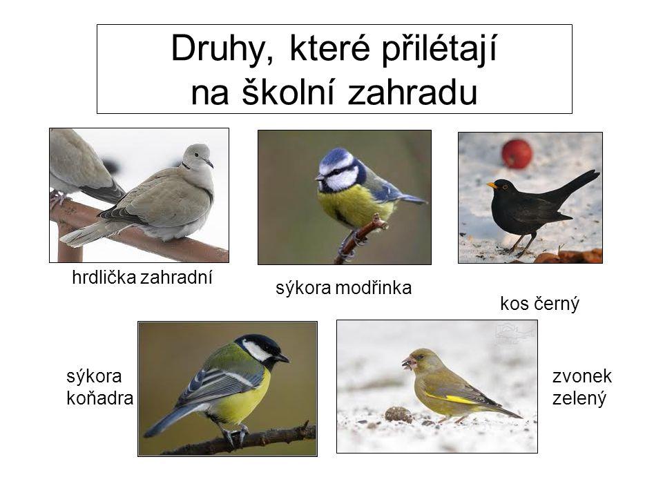 pěnkava obecná vrabec polní strakapoud prostřední vrabec domácíhýl obecný