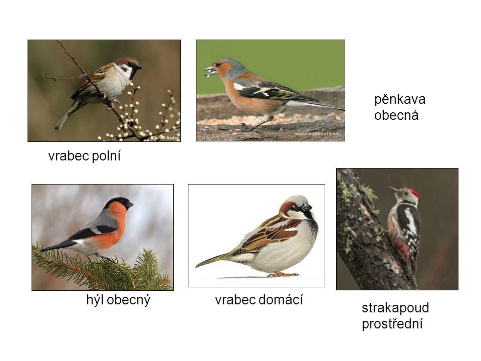 Význam ptáků na zahradě Ptáčci jsou hmyzožravci, pomáhají nám zbavit ovocné stromy hmyzích škůdců.